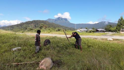 Ketua tim kunjungan kerja MRP wilayah La Pago I diberikan kehormatan oleh masyarakat memanah babi.